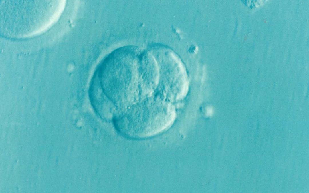 Защо е важно наличието на ендометриоза в ембрионите?